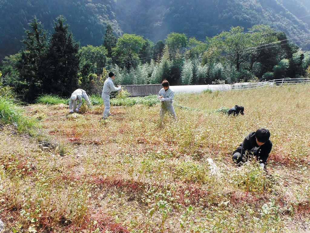 作物を収穫する様子